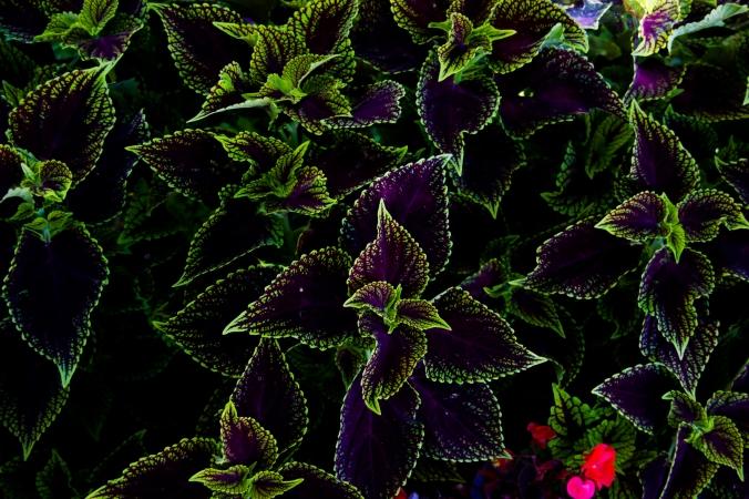 VioletFlower2.jpg